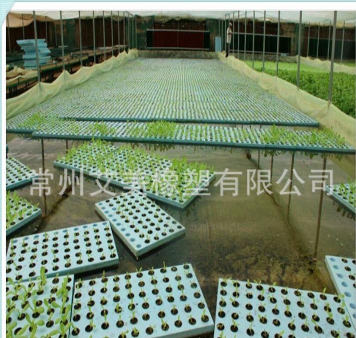 供应植物种植海绵 无土栽培水培育苗海绵 吸水海绵块